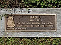 Basil the Cat (1999 - 2011) (26618689061).jpg