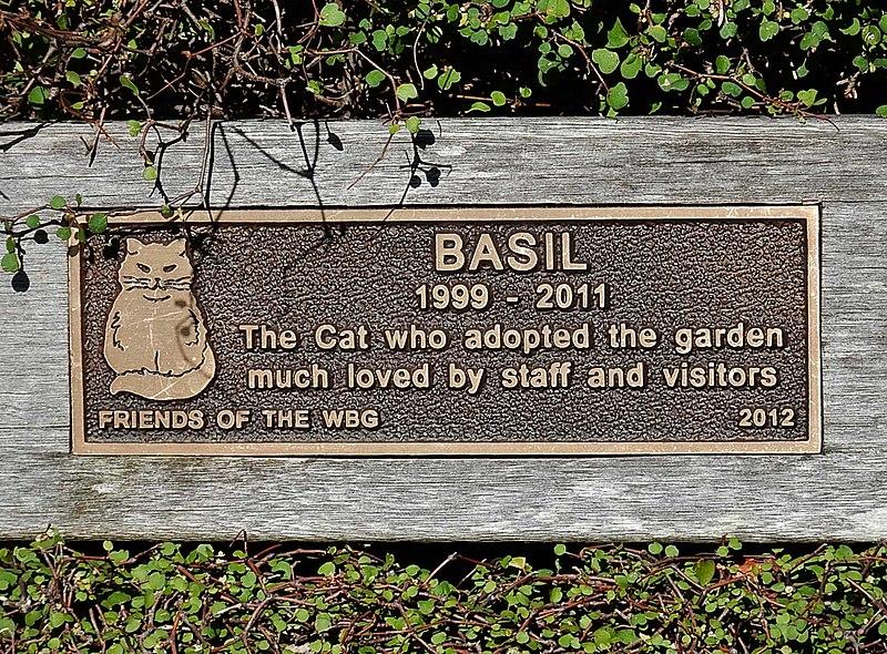 Basil the Cat (1999 - 2011) (26618689061).jpg