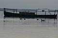 Bassin oiseau-061.JPG