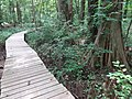 Battle Creek Cypress Swamp 22.jpg