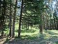 Battle Mountain Oregon forest (6027846325).jpg