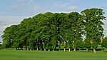 Baumbestand der Schnellenberger Allee, Naturdenkmal (ND-LG 065), Lüneburg, Ortsteil Oedeme, Landkreis Lüneburg, Niedersachsen.jpg
