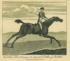 Bay Bolton - Bay Bolton, a horse belonging to his grace the Duke of Bolton, engraved by Richard Parr, 1739.