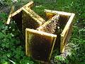 Bee wax.JPG