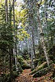 Beech Mountain trails (4338ff8b-8083-480a-a2a2-63748b738e13).jpg