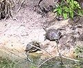 Belize29.jpg