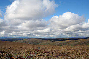 Tundra im Bering Land Bridge National Preserve