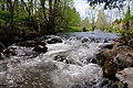 Bernauer Alb river near Bernau with nice waterscenes at 11 May 2015 - panoramio.jpg