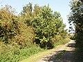 Bernwood Jubilee way at Ickford - geograph.org.uk - 244988.jpg