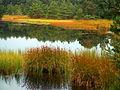 Bielawskie Błota. Jeziorko dystroficzne.jpg