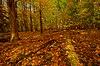 Big Eau Pleine Woods.jpg