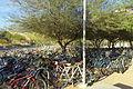 Bikes - Arizona State University - Tempe, AZ - DSC05949.JPG