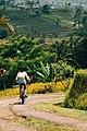 Biking Jatiluwih rice terraces.jpg