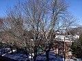 Binghamton, NY, USA - panoramio (44).jpg