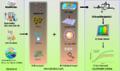 Biosensör bileşenleri.png