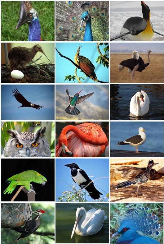 A diversidade das aves modernas.