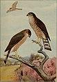Bird lore (1909) (14755297162).jpg