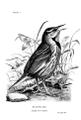 Birdcraft-0028-1.png