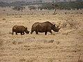 Black Rhinos Profile.jpg