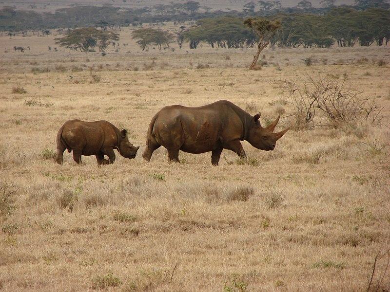 afrikanza-lewa-rhinos