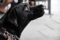 Blackdogprofile.JPG