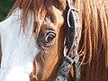 Blackstorm Basloir - close-up head.jpg