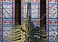Blue Whale. Natural History Museum. London (35914467180).jpg