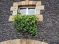 Blumenfenster neben der Klostergärtnerei Maria Laach 3.jpg
