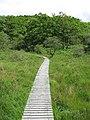 Boardwalk, Ariundle - geograph.org.uk - 1139459.jpg