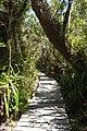 Boardwalk at Parque Nacional Chiloé (3162706127).jpg