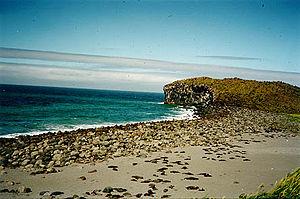 Bogoslof Island - Image: Bogoslof Island fur seal colony