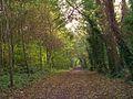 Bois du Caprice.jpg