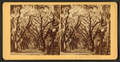 Bonaventure, Savannah, Ga, from Robert N. Dennis collection of stereoscopic views 2.png
