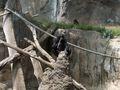 BonoboFishing02.jpeg