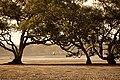 Boondall Wetlands (6968545822).jpg