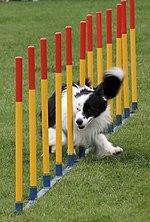 Dog Agility Training Nyc