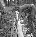 Bosbewerking, arbeiders, boomstammen, gereedschappen, Bestanddeelnr 251-7935.jpg