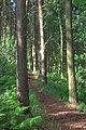 Bousdale Wood - geograph.org.uk - 853791.jpg