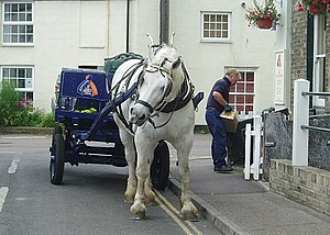 Adnams Brewery - A dray horse making beer deliveries in June 2006.