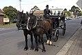 Bowral NSW 2576, Australia - panoramio (28).jpg