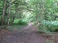 Bracken lined bridleway NW to Crouch Farm - geograph.org.uk - 1377110.jpg