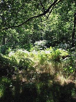 Bracken thicket - geograph.org.uk - 895730