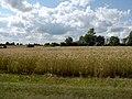 Braslaw District, Belarus - panoramio - alinco fan (15).jpg