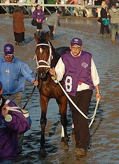 Hard Spun American-bred Thoroughbred racehorse