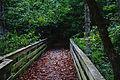 Bridge 23262662.jpg