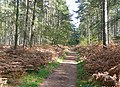 Bridleway across The Million east of Enville, Staffordshire - geograph.org.uk - 1006846.jpg