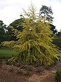 Brisbane City Botanic Gardens (06).jpg