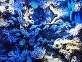 Bristol Aquarium - panoramio (2).jpg