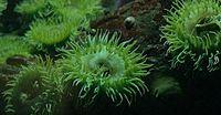 Buberel Unknown sea creature.jpg