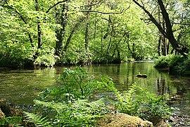 Buckland Monachorum, river Walkham 2 - geograph.org.uk - 805945.jpg